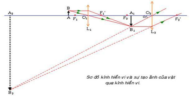 Bài 33. Kính hiển vi